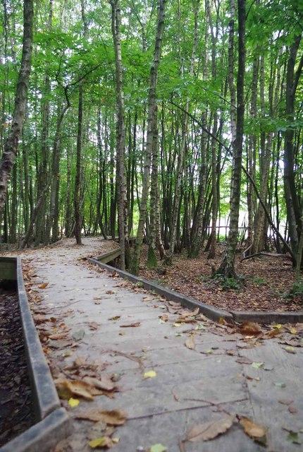 Boardwalk in Bedgebury Forest