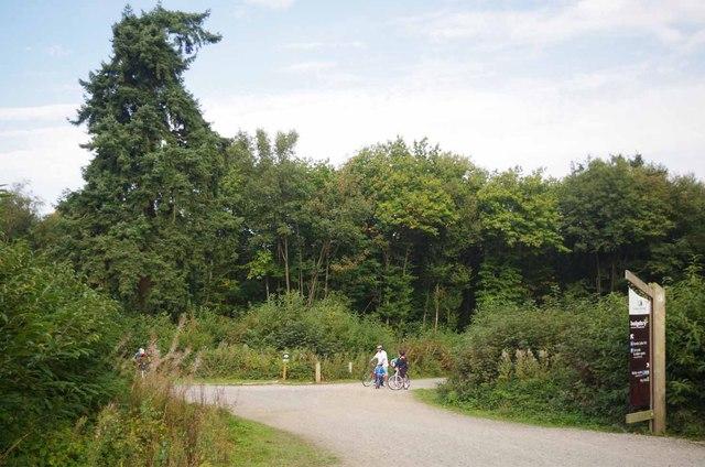 A Bedgebury Forest Trail