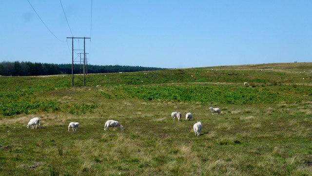 Rhos-gwawr access land