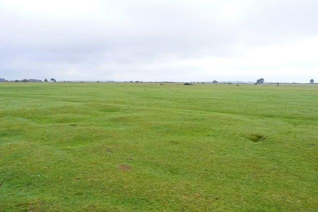Wilverley Plain