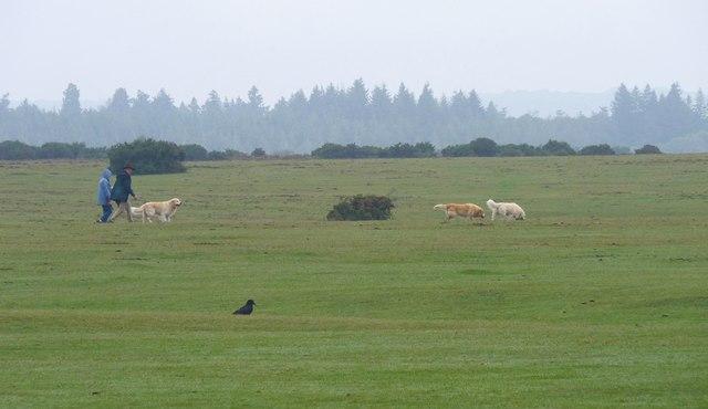 Dog Walkers on Wilverley Plain