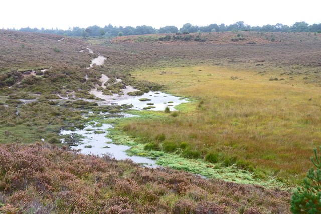 Boggy Area near Wilverley Plain