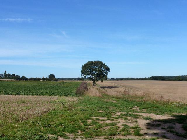 Footpath towards Roughton