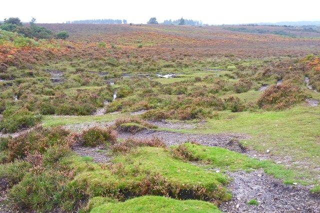 Heather and Bracken north of Wilverley Plain