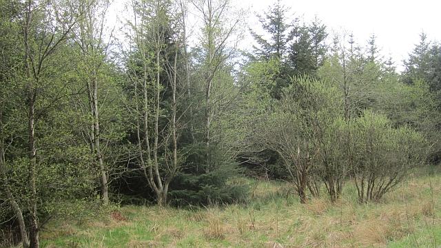 Former mossland, Plymuir
