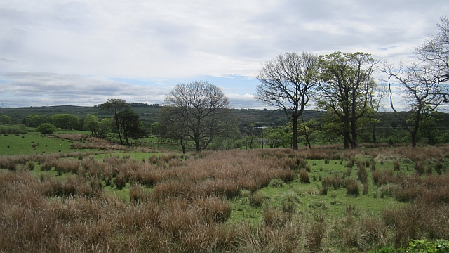 Rashy ground, Caldwell
