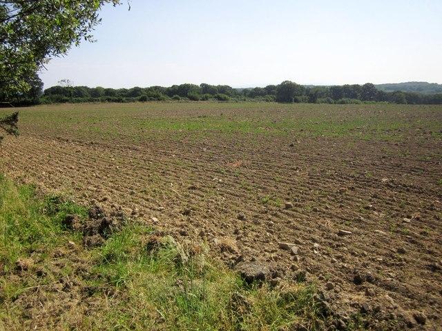 Arable field near Rackleigh Moor