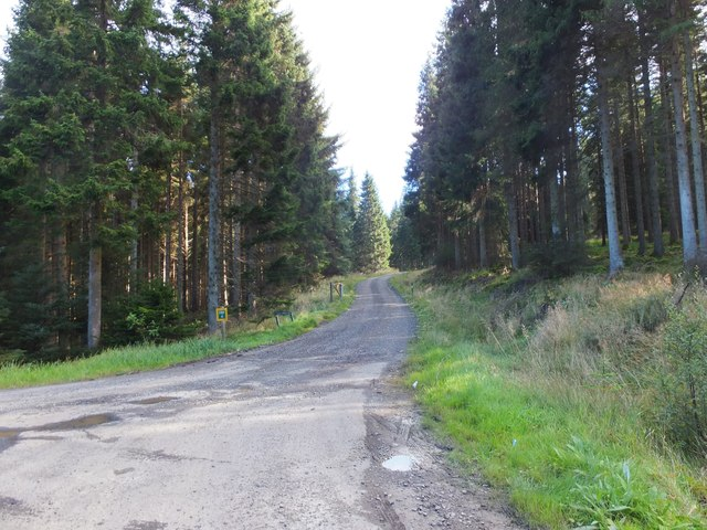 Track into the forest