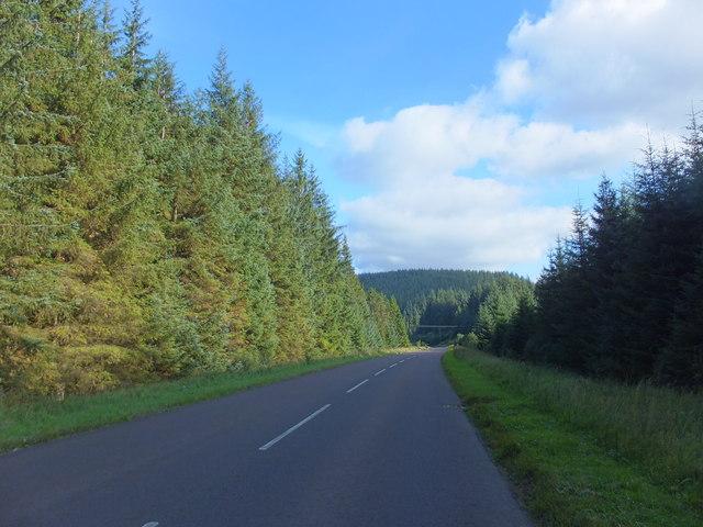 Road through Kielder Forest
