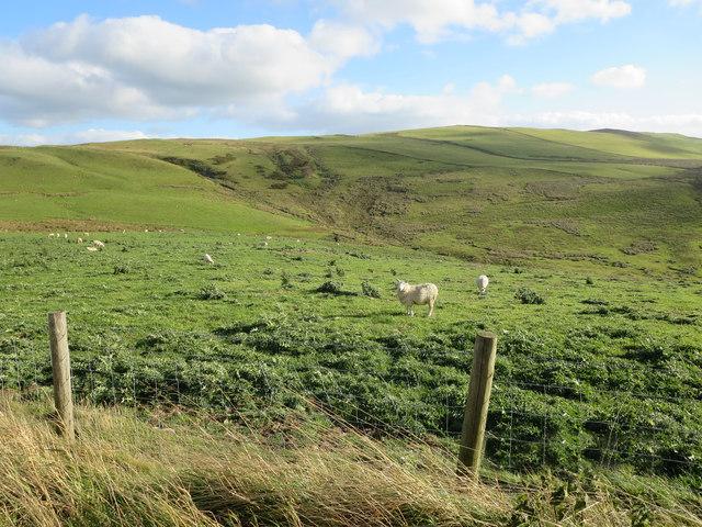 Sheep grazing land north of Cefn Gwyn
