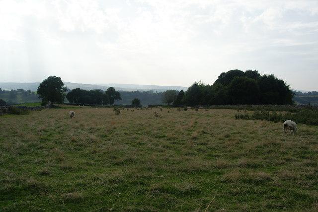 Sheep-grazing land above Hartington