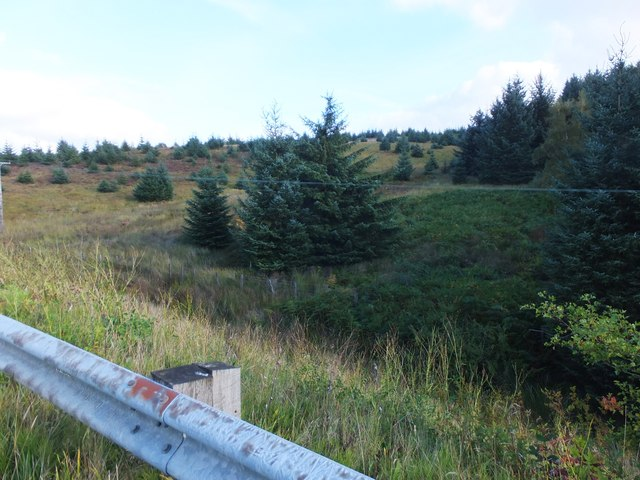 'Unforested' area near Elf Kirk Viewpoint