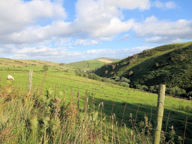 Sheep pasture above the Lleiriog