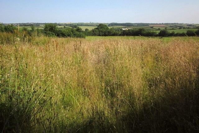 Grass at Adworthy