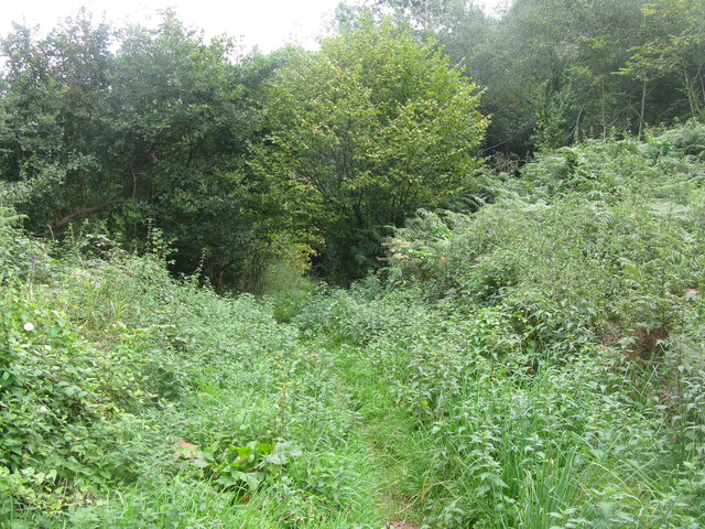 Footpath into the woods at New Mills