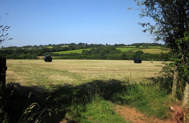 Grass field near Lower Adworthy