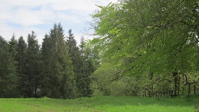 Woodland, Caldwell
