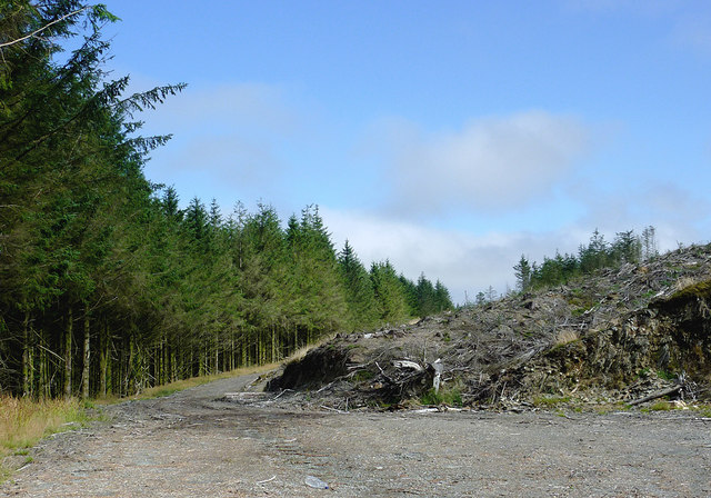 Coed Nantyrhwch in Powys