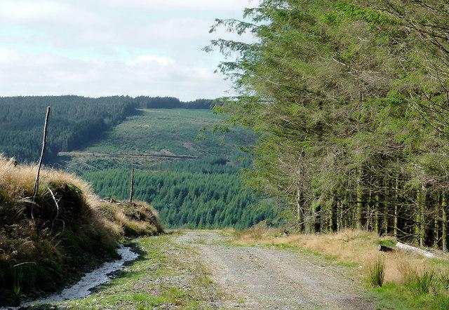 Coed Nantyrhwch and Cwm Tywi, Powys