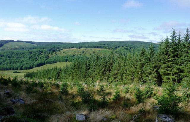 Tywi forest and Cwm Tywi, Powys