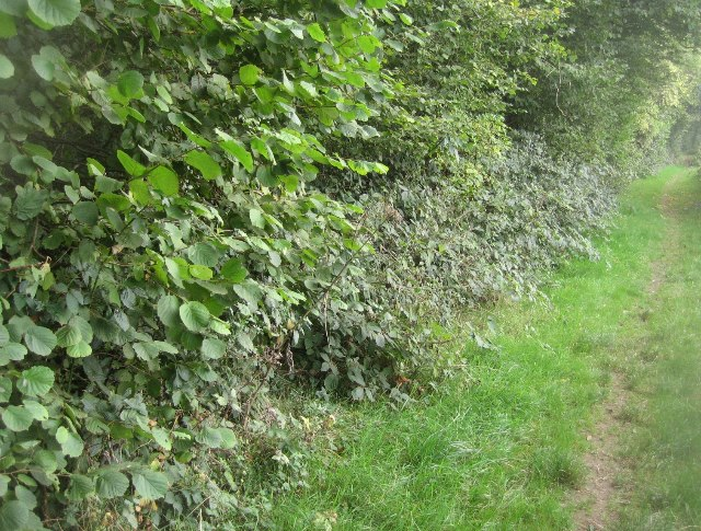 Path around Bull's Bushes Copse