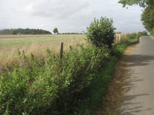 Fields west of Trenchard Lane