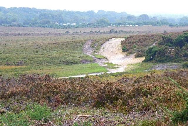 Pathways near Holmhill Bog