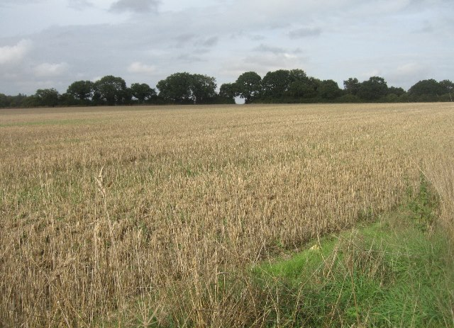 Fields north of Trenchard Lane