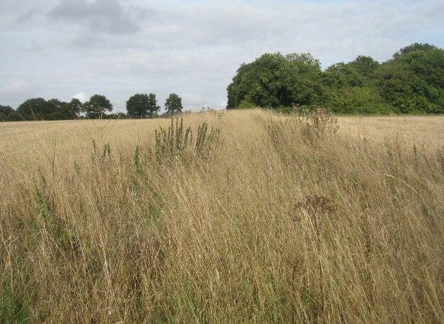 Overgrown farm track