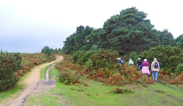 Walkers Entering Holmhill Wood