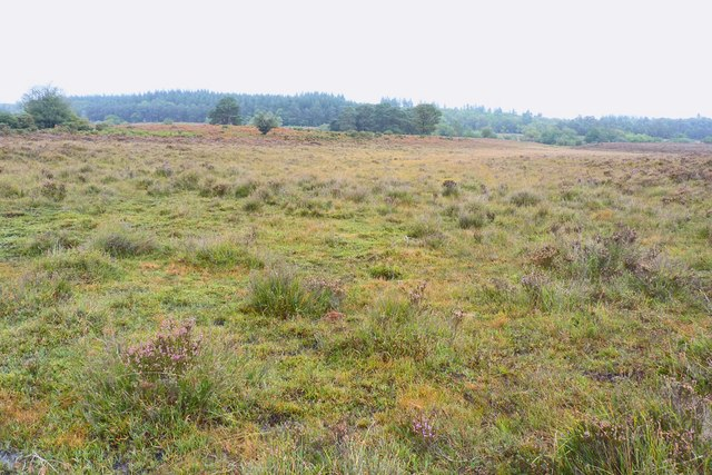 New Forest near Holm Hill