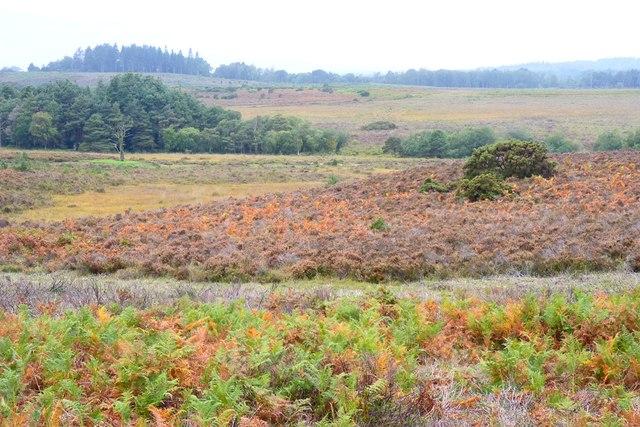 Autumn Bracken near Duck Hole