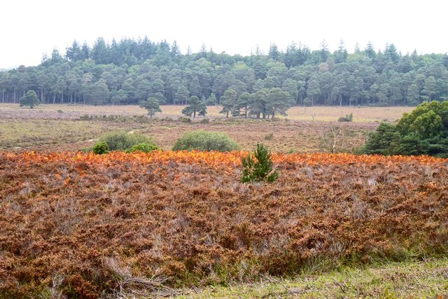 Orange Bracken near Duck Hole