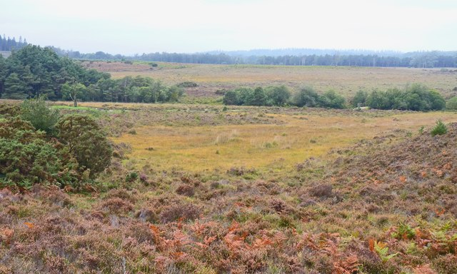New Forest View near Duck Hole