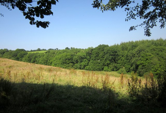 Meadow by the Adworthy Brook