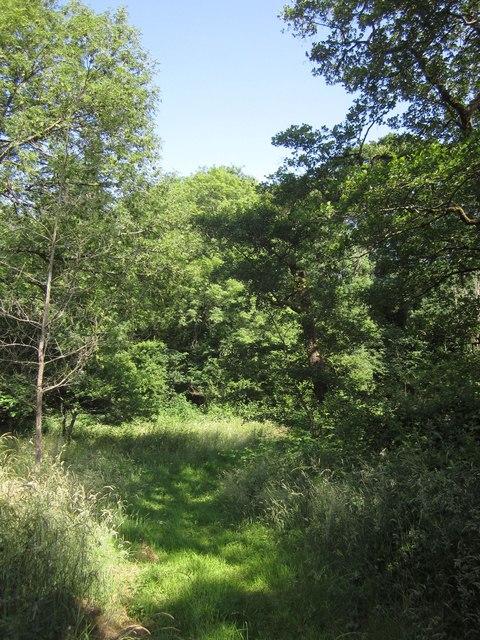 Woodland by the Adworthy Brook