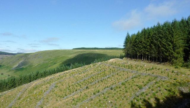 Coed Nantyrhwch by Cwm Tywi, Powys