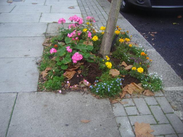 Flower bed on Blenheim Gardens