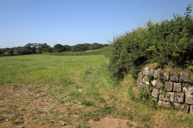 Edge of field, West Yeo
