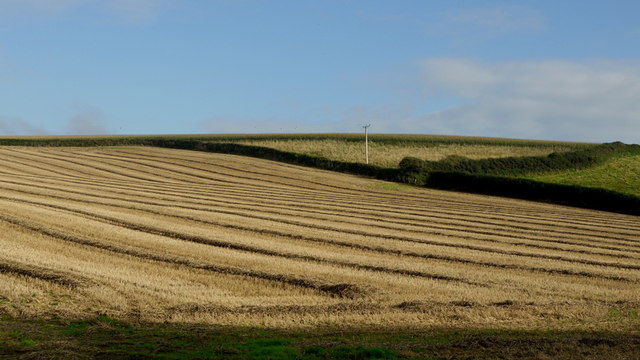 Straw and stubble rows