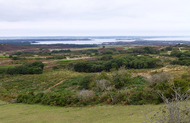 View over heathland to Poole Harbour