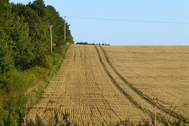 Stubble field by a strip of wood