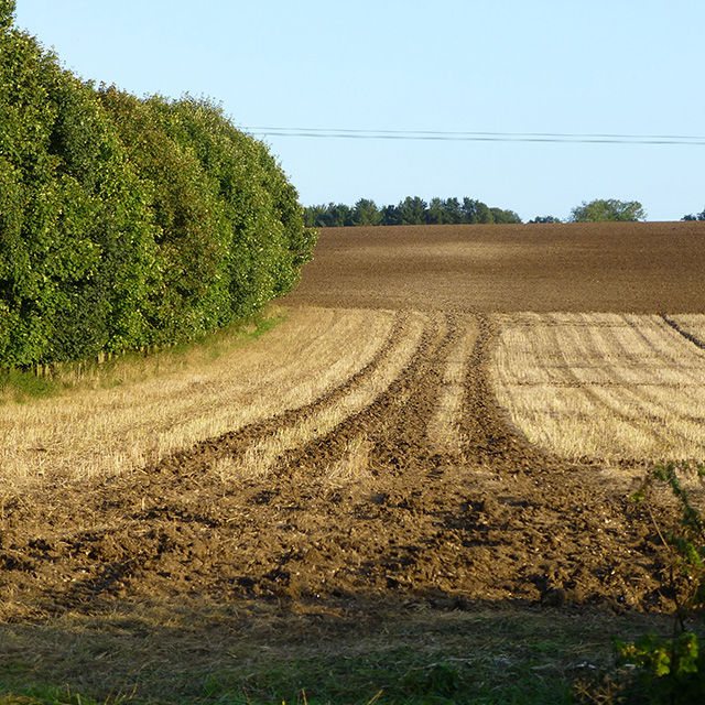 Stubble and ploughed field