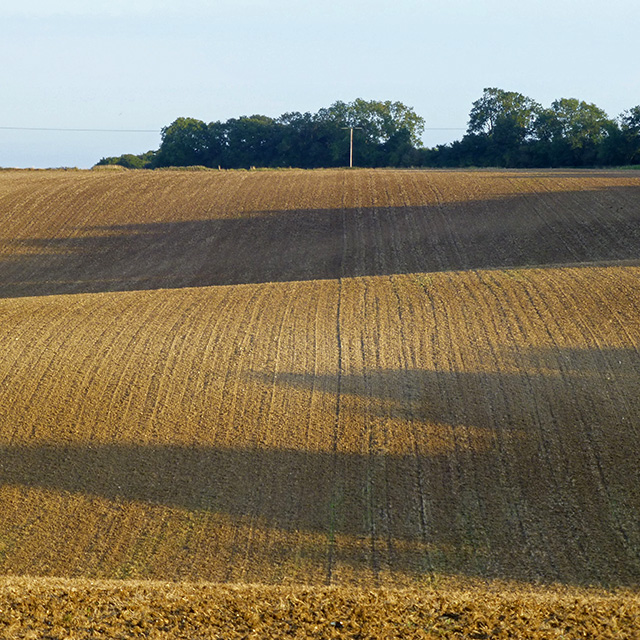 Stubble field with evening shadows