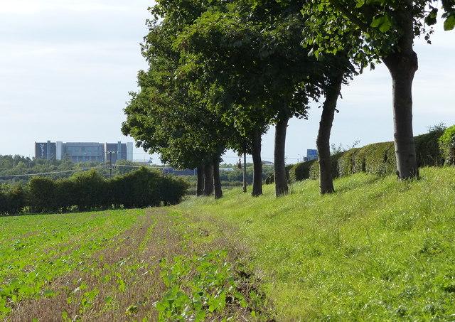 Field and trees near Spring House Farm