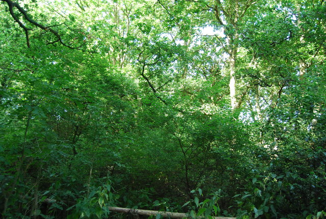 Woodland, Jubilee Country Park