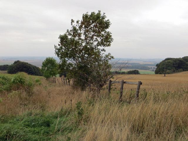 Field Boundary near Bonby