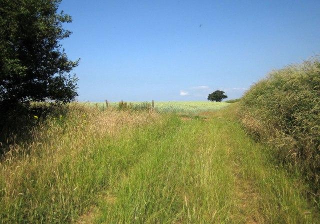 Path to Dart Raffe Farm