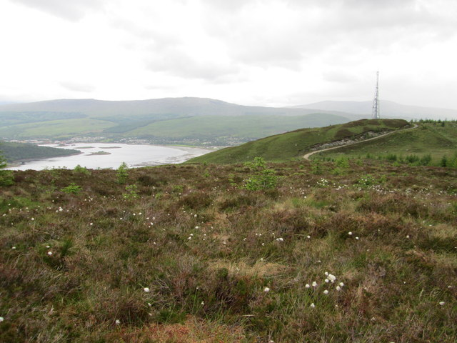 Cotton grass and heather on Cow Hill