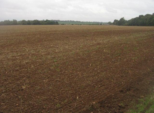 Neatly prepared - St Johns Field